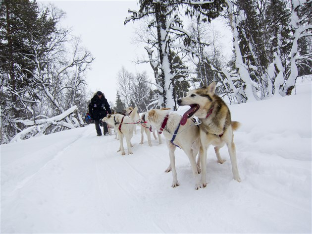 Optional husky sleigh ride in Alta